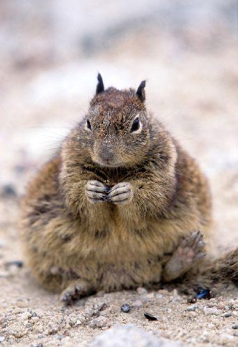 Ca_squirrel012_2