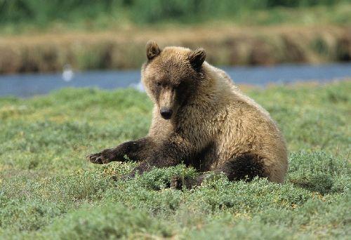 Ak_bear016