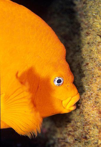 Ca_fish020