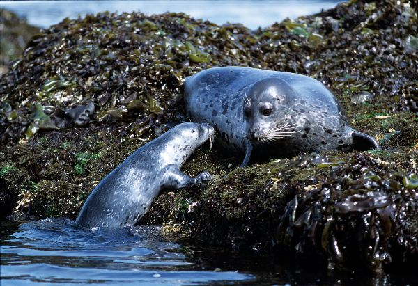Ca_hbseal025