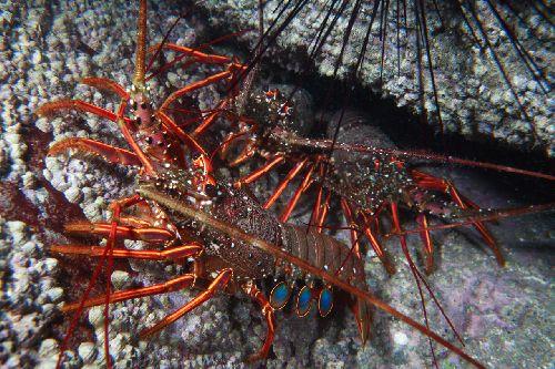Jp_shrimp00012