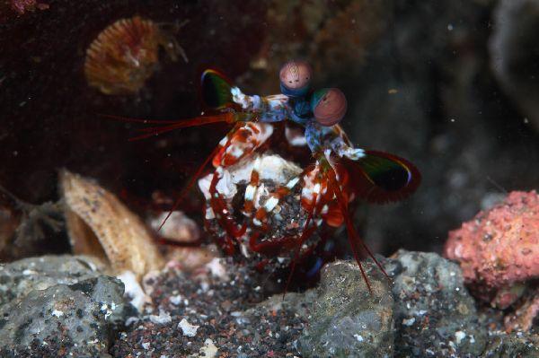 Jp_shrimp00043