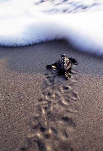 Jp_turtle059_1